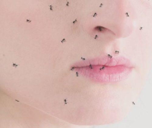 hormigas – Festival MAV